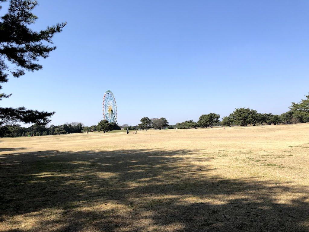 ひたち海浜公園大草原